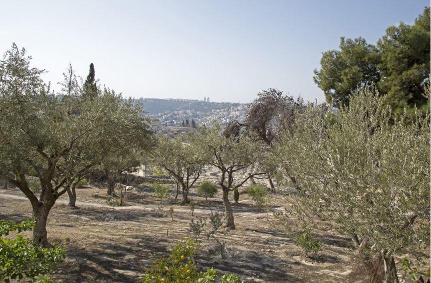 Útban Jeruzsálem felé